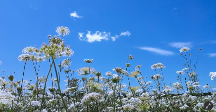 Wiesenblumen wachsen in den wolkenlosen Himmel
